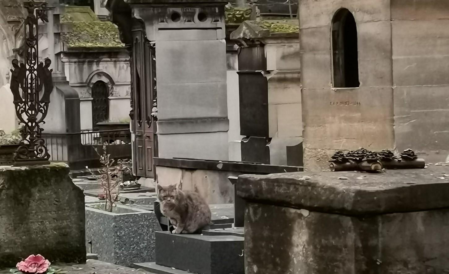 chat gris du cimetière de Montmartre